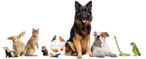 Какое животное завести дома - решать Вам!