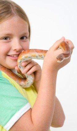 Змея - экзотический вид домашнего животного