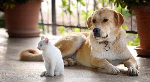 Собаки могут полюбить кошек!