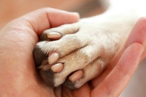 Верность пса заслуживает похвалы!