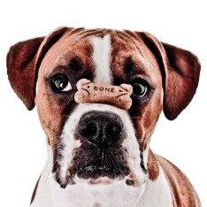 Как воспитать собаку