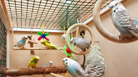 Клетки для волнистых попугаев