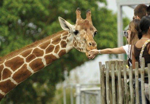 Сходить в зоопарк или цирк