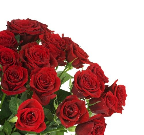 Огромнейший букет цветов