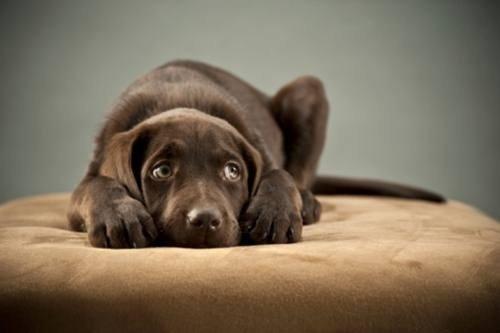 Как правильно воспитать собаку?
