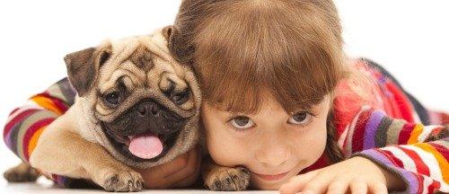 Как воспитывать взрослую собаку?