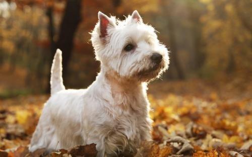 Как воспитать собаку удобную для жизни?