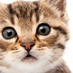 Как выбрать котенка