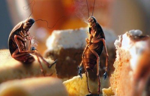 Тараканы отдыхают