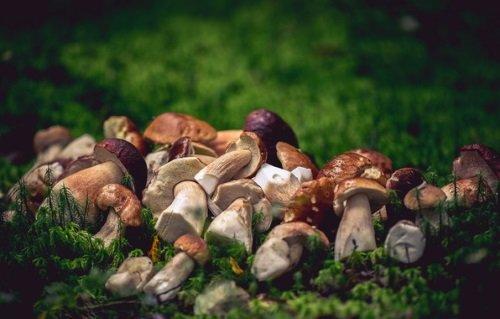 Удачно собрали грибы