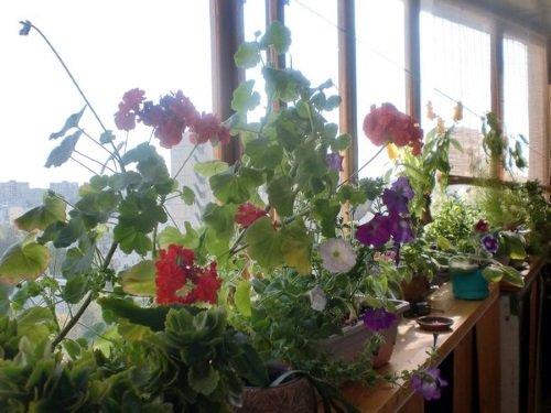 Цветник на балконе