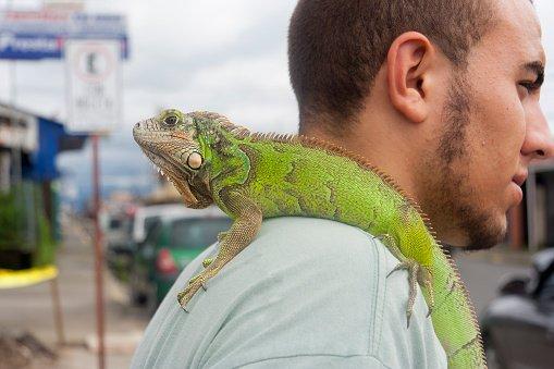 Игуана на плече у парня